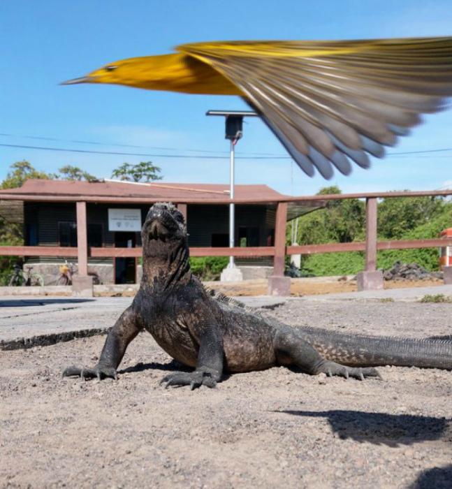 Возможно, через секунду птичка будет съедена! | Фото: Всяко.нет.