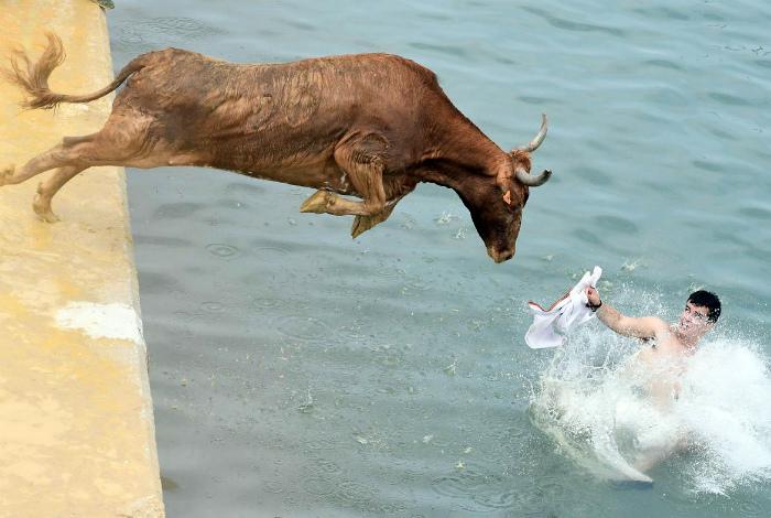 Кажется, разъяренных быков вода не останавливает! | Фото: Al Bawaba.