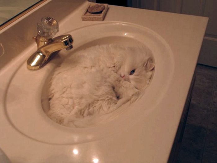 Кот - недостающий кусок пазла.