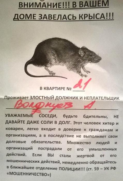 Хитрая и коварная крыса.
