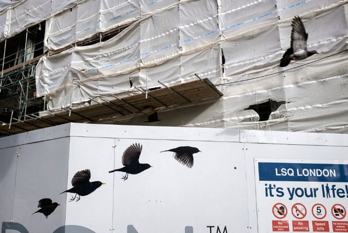 Ожившие птицы.