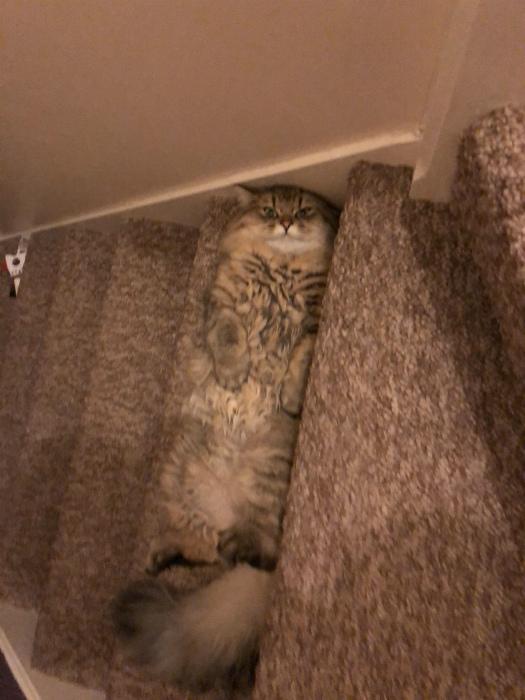 Притаился на лестнице. | Фото: Reddit.