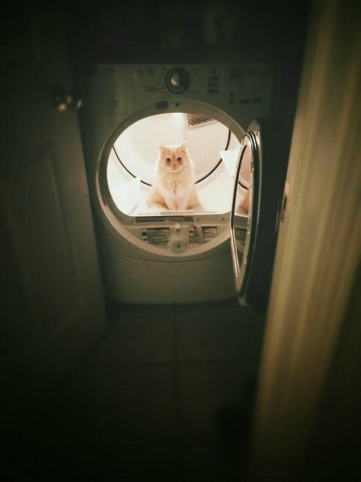 Кот в стиральной машинке.