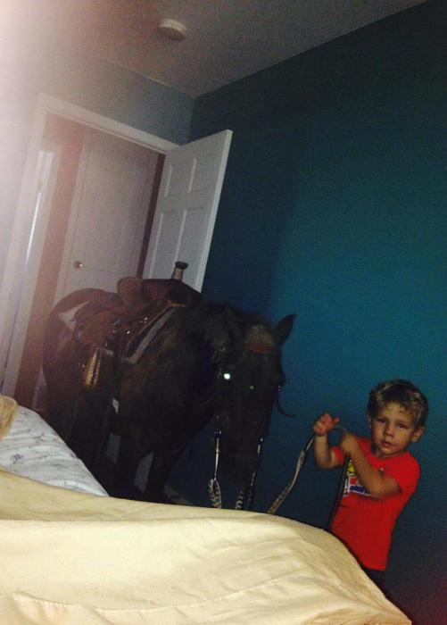 «Минуточку, а откуда взялась лошадь?»