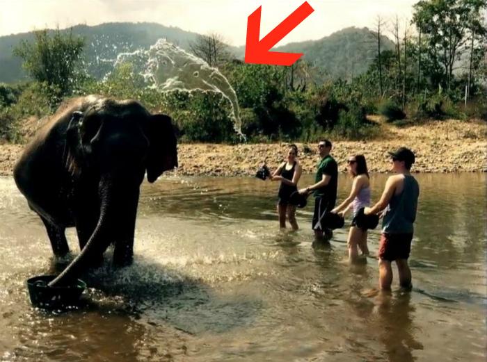 Образ слоника. | Фото: Reddit.