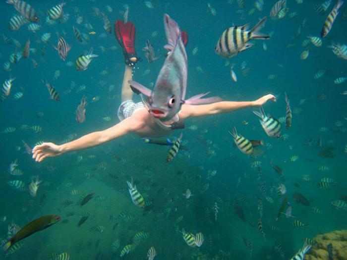 El mundo submarino.
