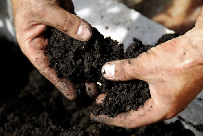 Неподходящая почва для рассады.