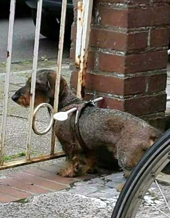 Ограничитель для собаки.