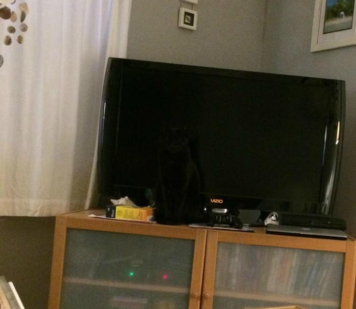 Черный кот на черном фоне - это как иголка в стоге сена. | Фото: BrightSide.