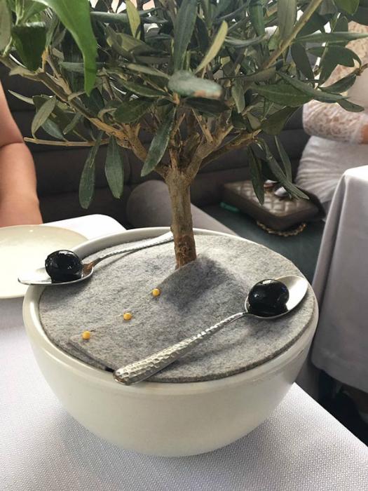 Оливки и оливковое дерево.