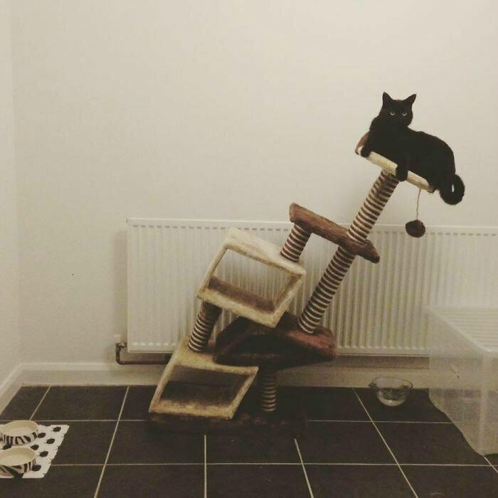Пизанская башня для кота. | Фото: humor.fm.
