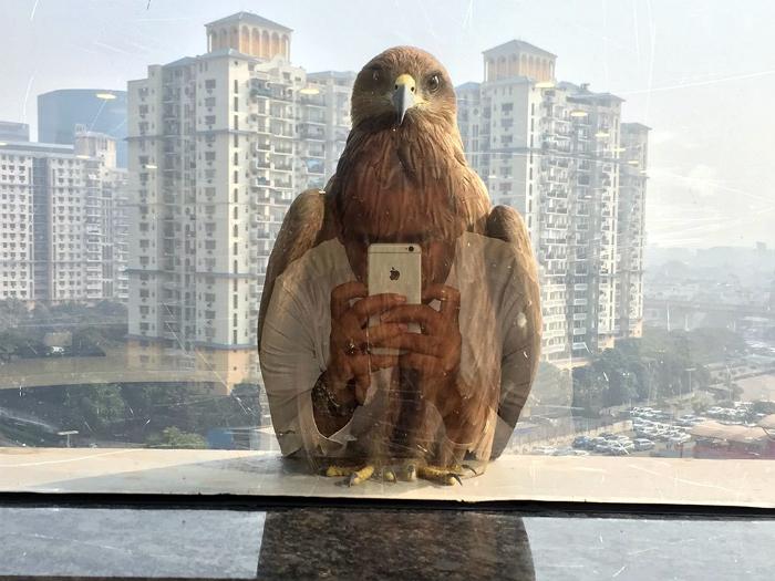 Орел за окном.