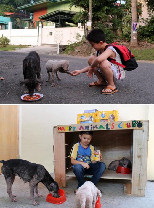 Семи летний мальчик и его приют для собак.