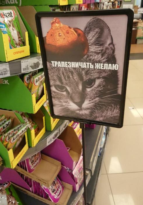 Барин голоден.   Фото: howmade.ru.
