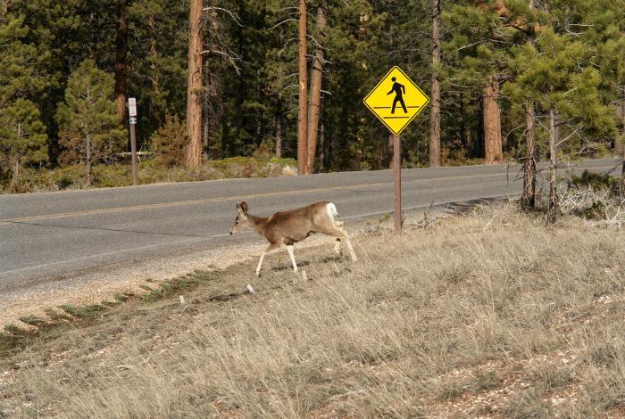 Животные, будьте бдительны, здесь иногда пробегают люди!