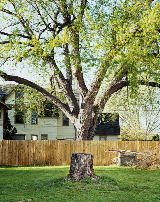 Куда исчезла часть дерева?