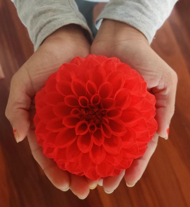 Это же эталон цветочной красоты! | Фото: Know Your Meme.