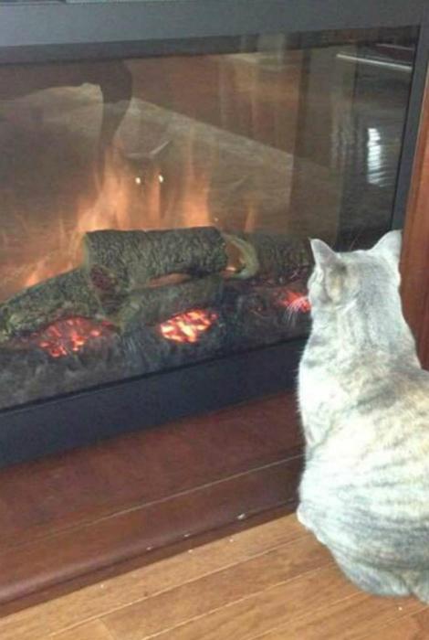 «А может кот, вовсе и не кот...» | Фото: Odd Stuff Magazine.