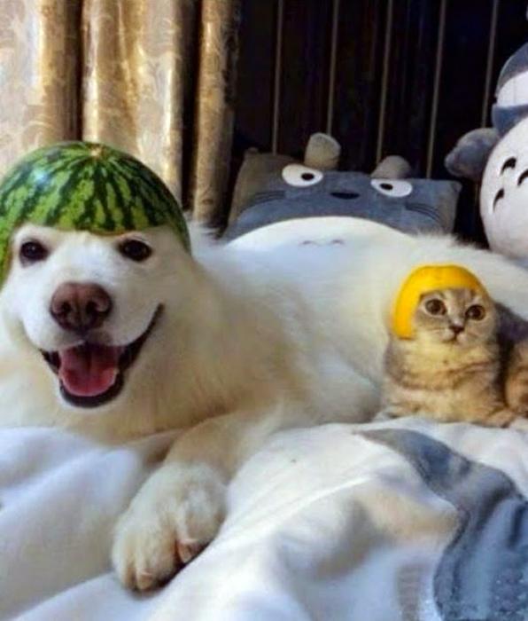 Фруктовые шлемы.