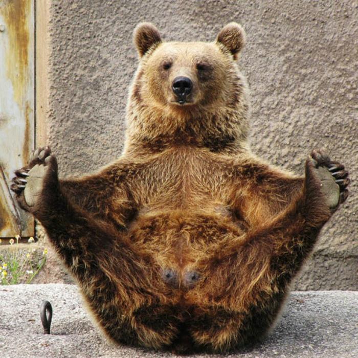 В России медведи свободно ходят по улицам.