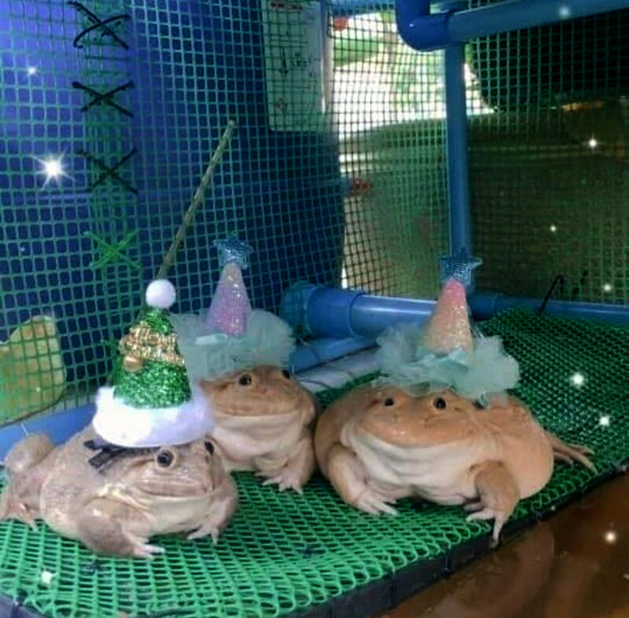 Продажа волшебных лягушек.   Фото: Fishki.net.