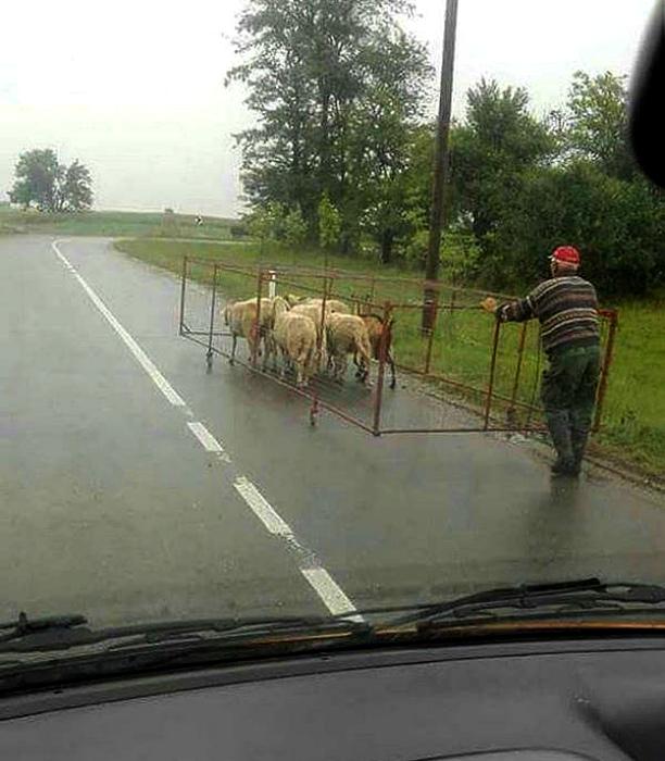 Чего только не увидишь на дороге... | Фото: Onedio.