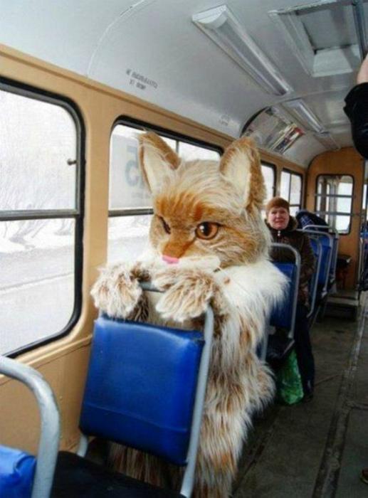 Эффектный пассажир.