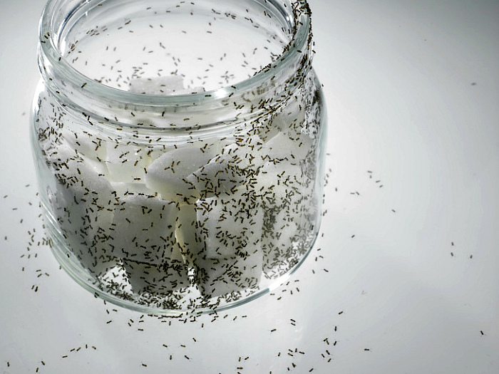 Простая приманка для ос и муравьев.