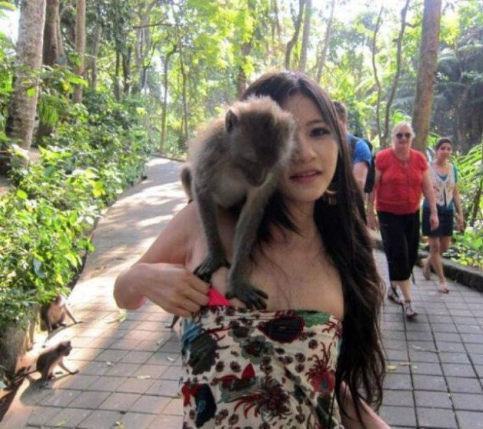 Экспертная оценка от любопытной обезьянки.