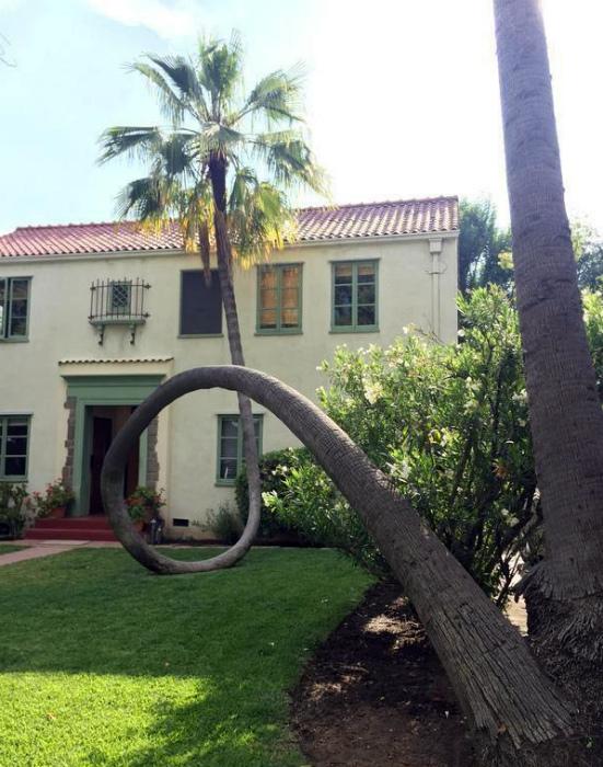 Сломанная пальма.
