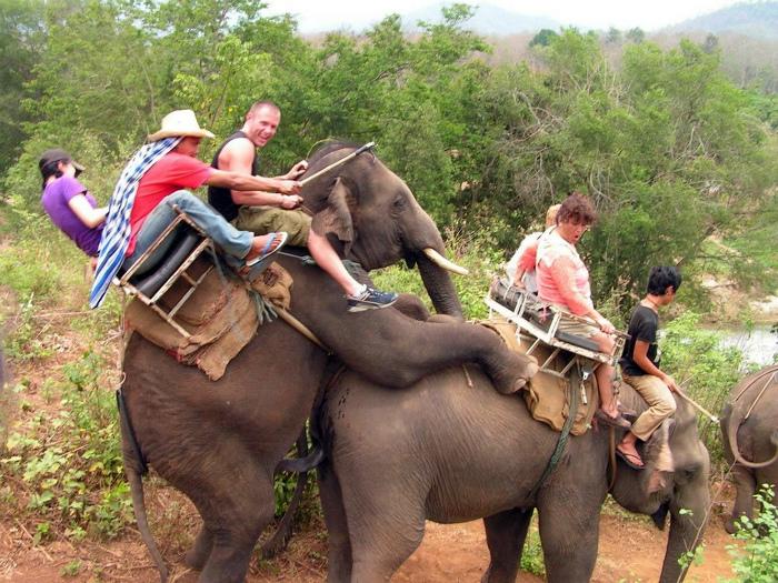 Веселое катание на слонах.