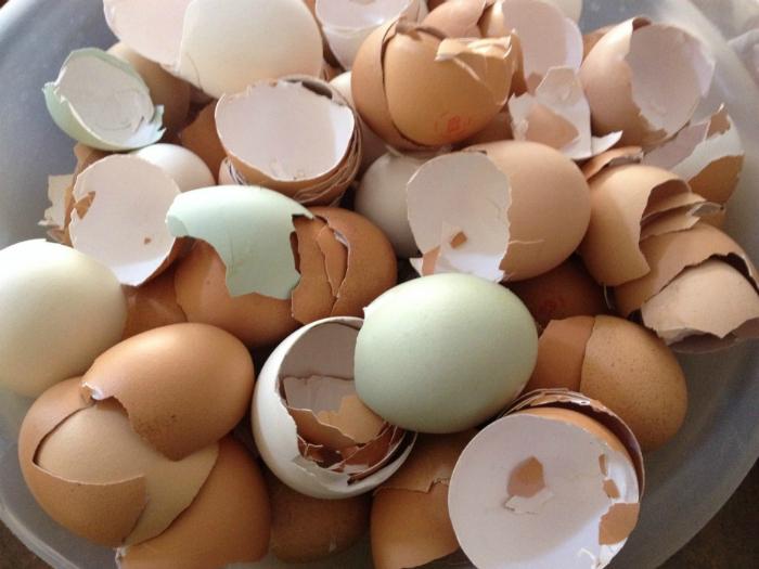 Яичную скорлупу нужно измельчить и смешать её с землей для комнатных растений, чтобы обогатить землю кальцием.