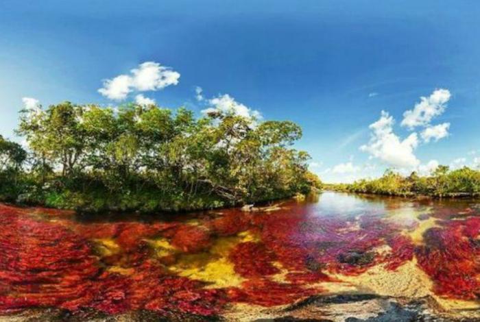 Разноцветные водоросли, которые просматриваются сквозь кристально-чистые воды реки Каньо-Кристалес.