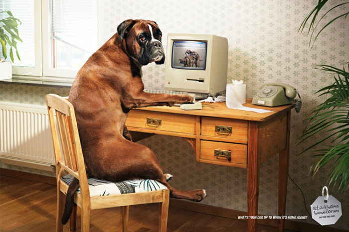 Чем занимается ваша собака, когда никого нет дома.