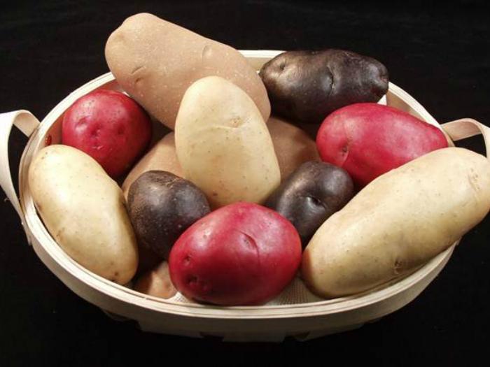 Цена: 500 евро за килограмм. Самый дорогой сорт картофеля.