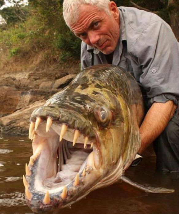 Рыба-монстр.