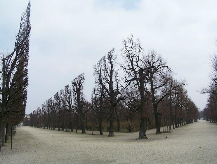 Деревья в парке Шёнбрунне, Вена.