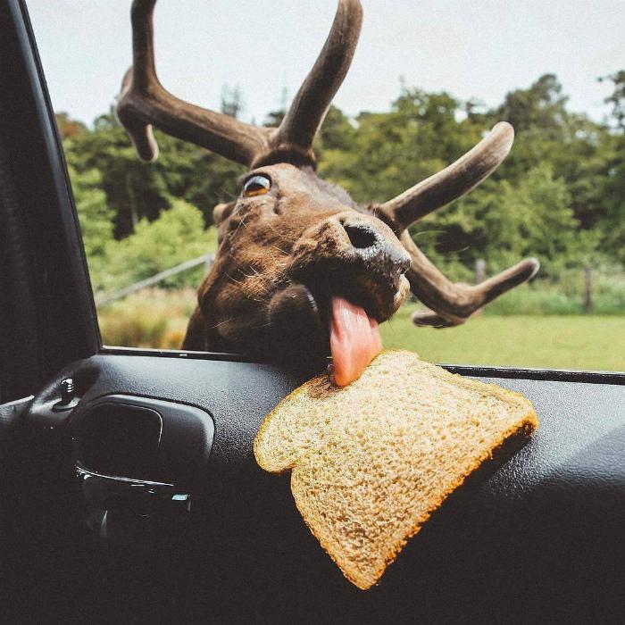 Никто не устоит перед хлебушком с солью! | Фото: Reddit.