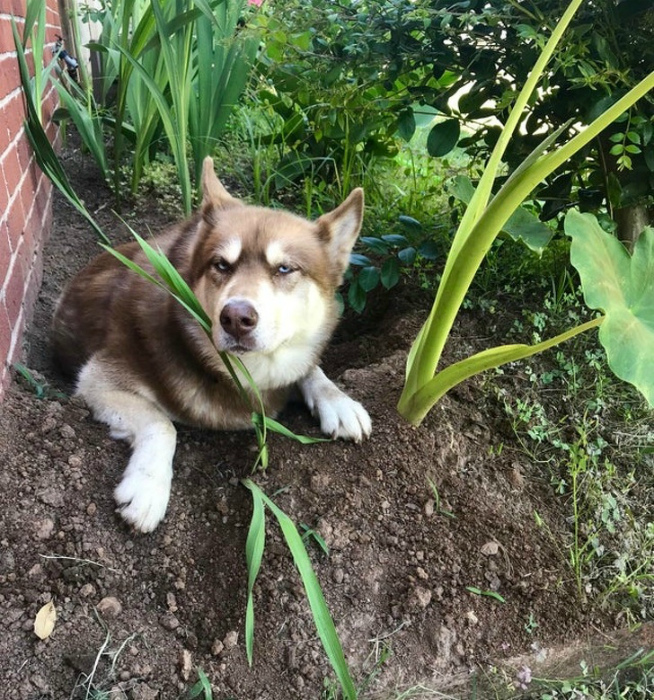 И посадил дед репку... А выросла собака! | Фото: AdMe.