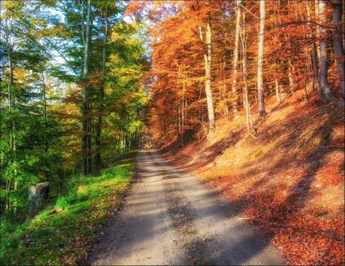 Потрясающий снимок леса в самом начале осени.