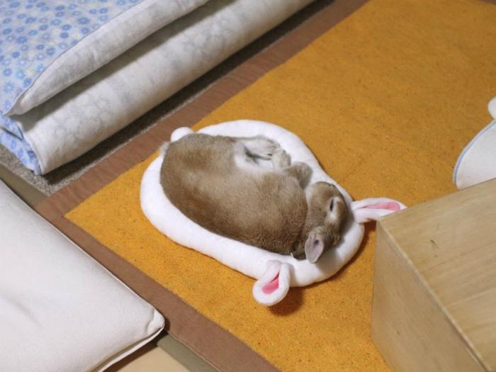Спящий кролик.
