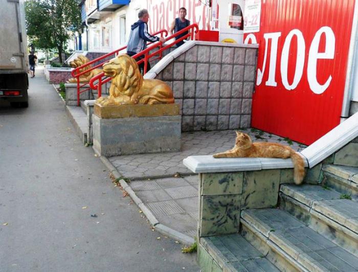 Младший брат льва.