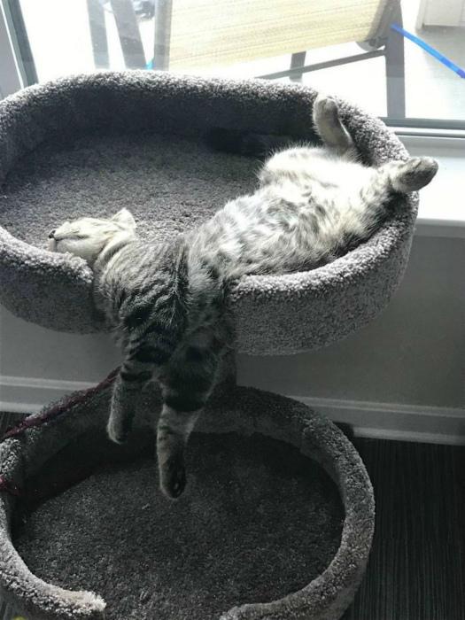 Этот кот вообще живой?
