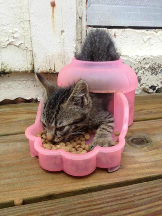 Novate.ru требует познакомить кота с инструкцией к миске. | Фото: watson - Bild.