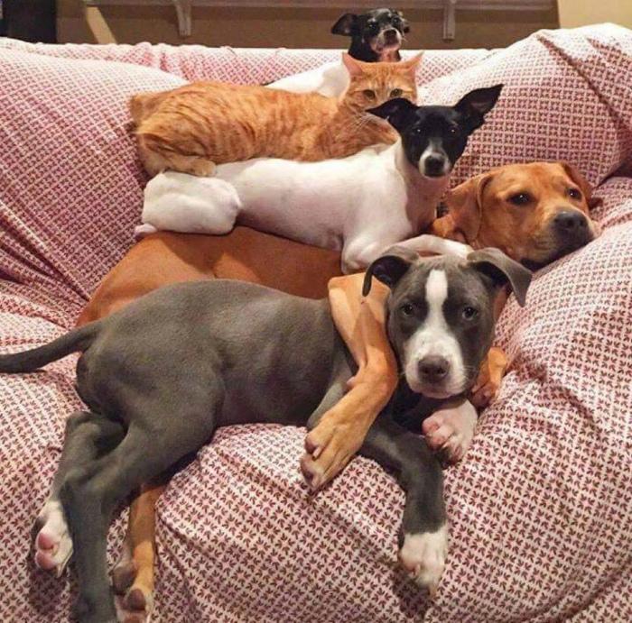 Четыре собаки и кот.