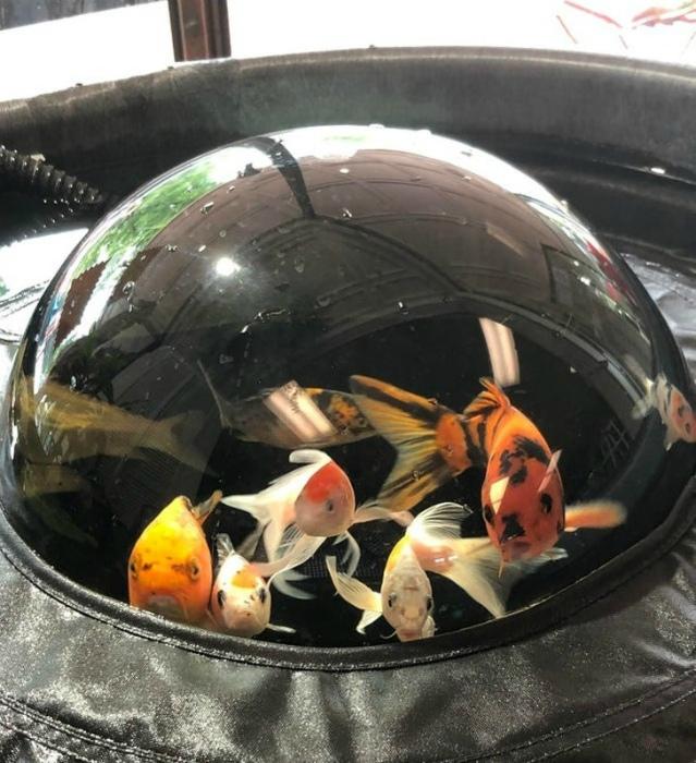 Сферический аквариум. | Фото: Foozine.