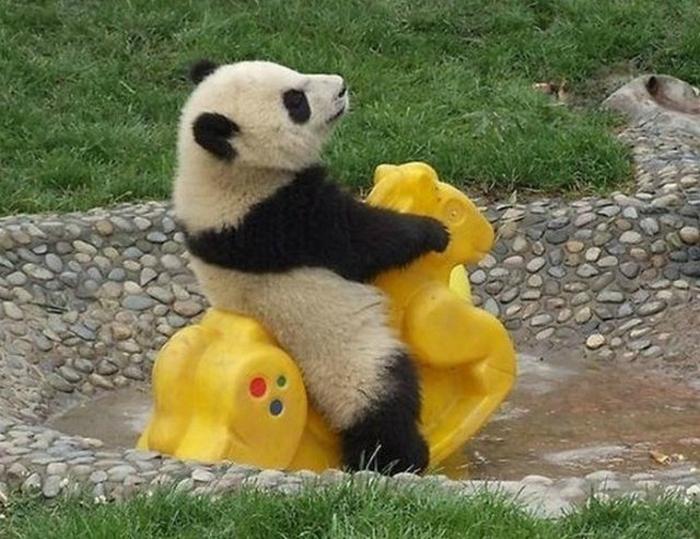Панда и качалка.