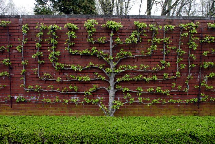 Грамотное озеленение участка. | Фото: Picssr.