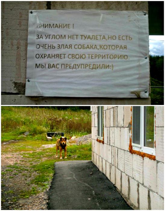 Собака - не фэйк! Не веришь - проверь! | Фото: Twizz, Пикабу.