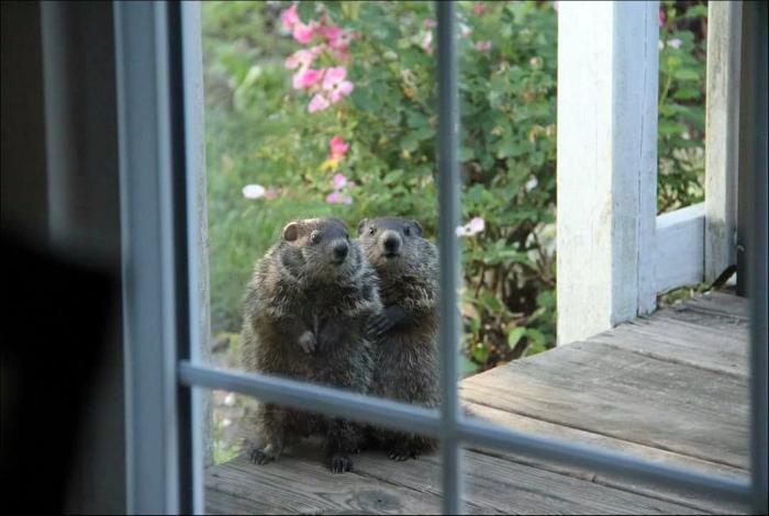 Пушистые соседи.